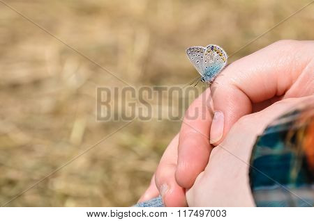 Little Beautiful Butterfly Sits On A Hand Of The Girl