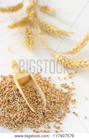 Close Up Of Pearl Barley