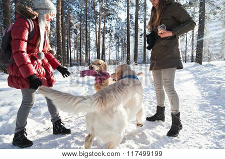 two golden retriever dogs playing outdoors in winter. Two girls
