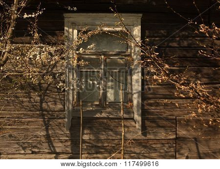 Window Of Old Log House And Tree In Blossom.