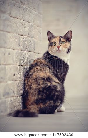 Multi-colored Cat Near A Brick Wall.