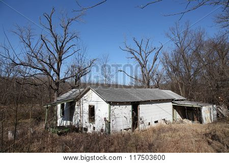 Abandoned House in Weeds and Trees