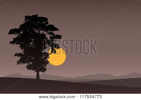 A Lone Tree with Dark Sunset, Sunrise.