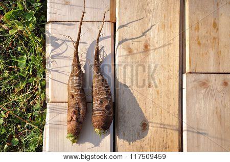 Fresh radish on a wooden board.
