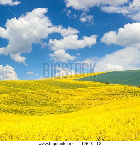 Waves hills Landscape of colorful fields and beautiful  blue sky, spring or summer abstract background