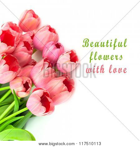 Beautiful  Pink Tulips, fresh flowers with love, isolated on white