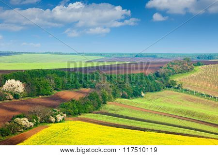 Countryside Colorful Fields and Sky Background - beautiful nature landscape, idillyc waves of hills, wallpaper