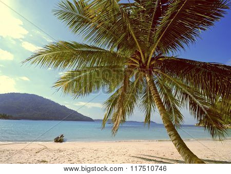 Tropical Island Palm Tree Paradise Beach Holiday Concept