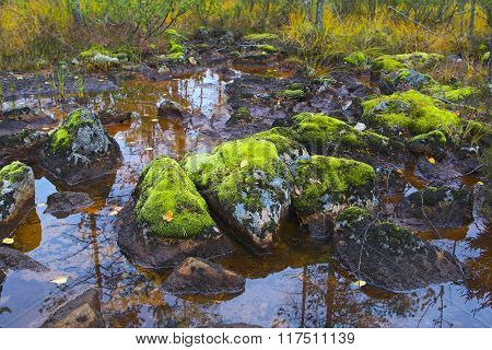 Mountain Swamp In Inari, Northern Finland.