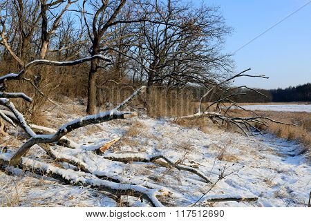 Scene with bring down tree in winter forest
