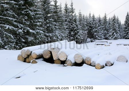 Scene with pine logs under snow in mountain forest
