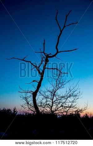 old dead tree on dark sunset sky background