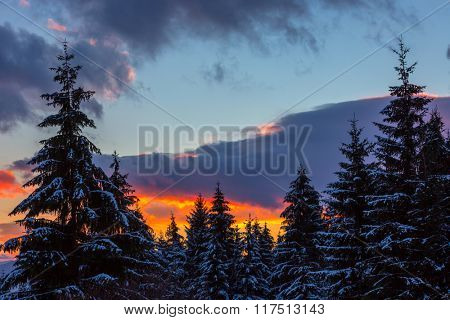 majestic sunset scene and pine trees