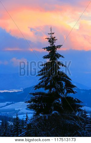Single pine tree on sunset sky background