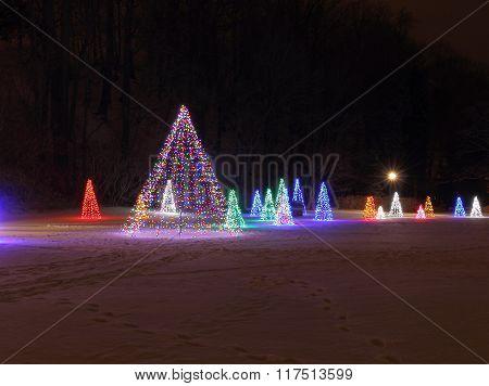 Christmas Trees of Lights