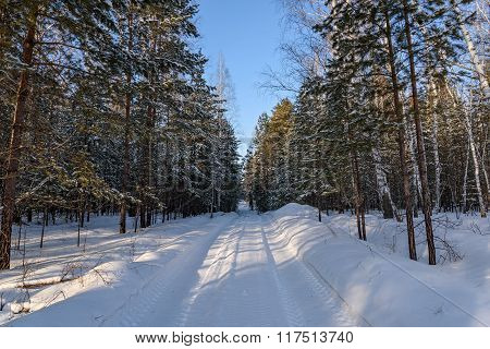 Winter Forest Snow Road