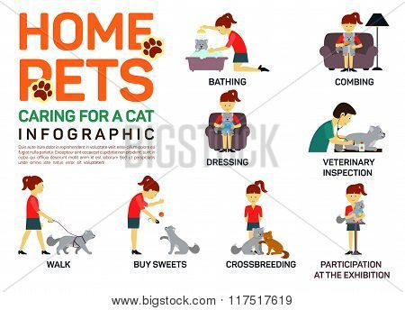 Vector flat illustration infographic of caring about pets cat. Bathing, washing, dressing, combing,