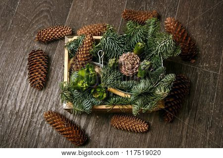 Branch of Pine Tree with needles and Cone