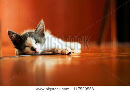 Cute Kitten Sleeping On The House Floor