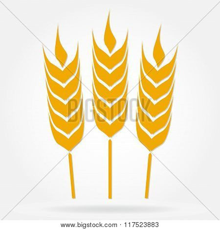 Wheat ears or rice icon. Agricultural symbol isolated on white background. Design element for bread
