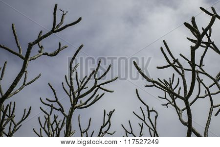 Skyward Branches