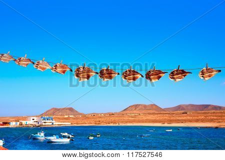 Majanicho dried Parrot fish Vieja in Fuerteventura Canary Islands Sparisoma cretense