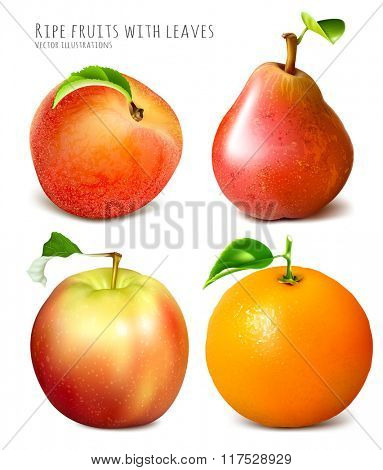 Collection of fresh ripe fruits. Fully editable handmade mesh. Vector illustration.