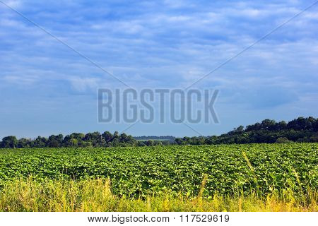 Landscape Of A Green Field, Forest And Cloudy Blue Sky