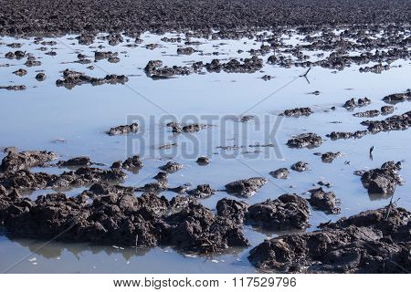 Mud Field Covered In Water
