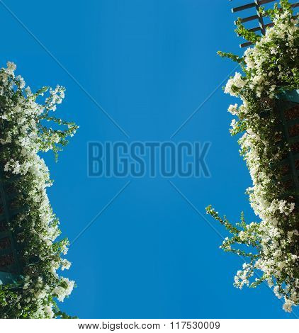Flowering Bushes On Blue Sky Background