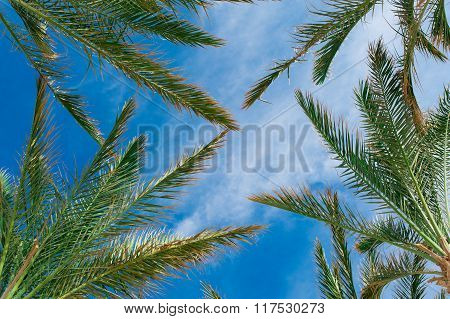 Palm Branches Against The Blue Sky Tropical Concept