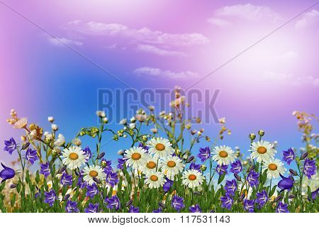 Background Of Flowers. Chamomile Field.