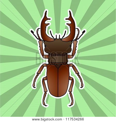 Insect anatomy. Sticker stag-beetle. Lucanus cervus. Sketch of stag-beetle. stag-beetle Design for c