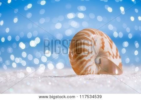 nautilus shell on white  glitter and blue background with bokeh
