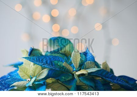 Blue poinsettia with glitter