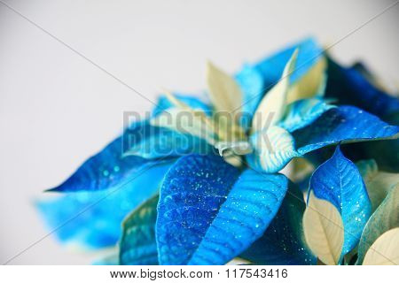 Glittery poinsettia in blue with copy space