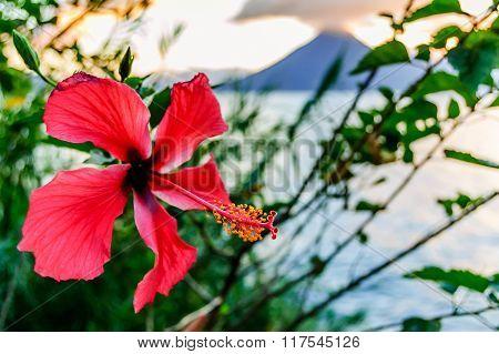 Hibiscus Flower, Lake & Volcano, Guatemala