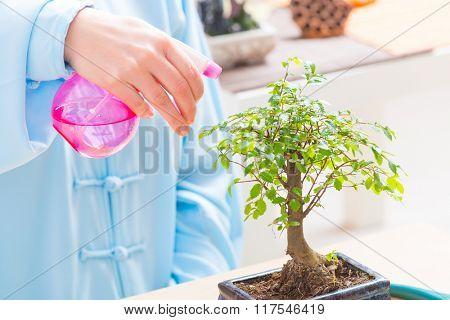 Woman wearing traditional chinese uniform watering bonsai tree