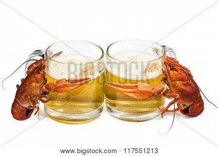 Two Red Boiled Lobsters Are Hugs Mugs Of Fresh Beer