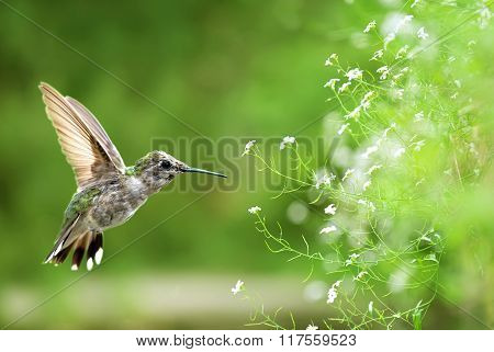 Bird In Flight Against Bright Spring Background