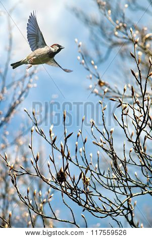 Bird In Flight Spring Concept Vertical Image