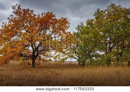 Beautiful Autumn Fall Nature Landscape. Golden Leaves