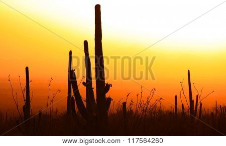Saguaro national park in twilight