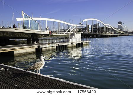 Single Seagull Near Rambla De Mar Bridge In Barcelona Port, Spain