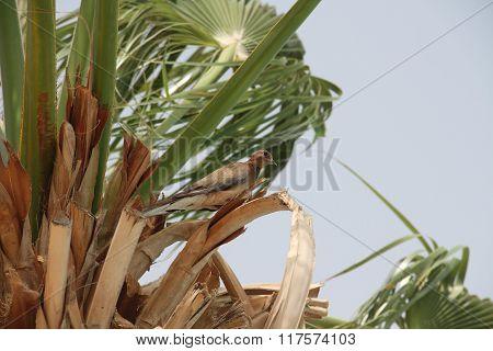 Bird on a palm tree