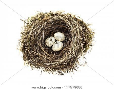 three eggs in bird nest isolated on white