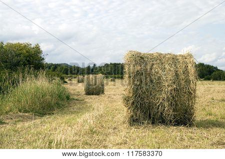 Hay rolls in the field in September