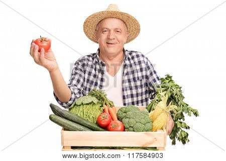 Mature farmer standing behind a wooden crate full of vegetables and holding a single tomato isolated on white background