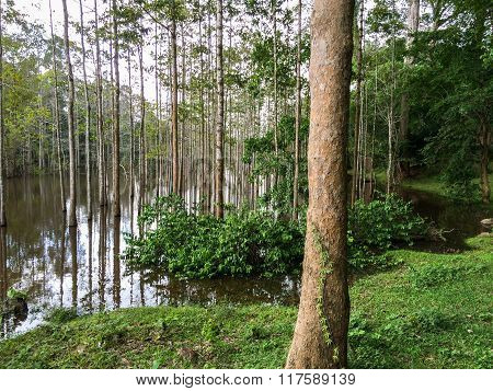 Trees reflectend in the water