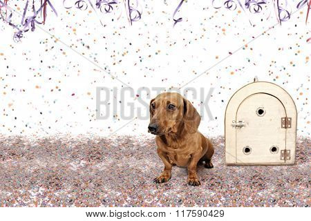 Dachshund at Carnival Party time theme